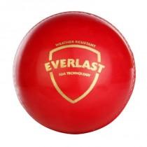 SG Everlast Cricket Ball
